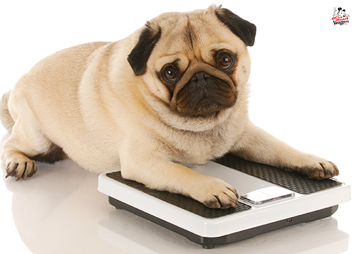 Kibble, treats make both dogs and people unhealthy and overweight