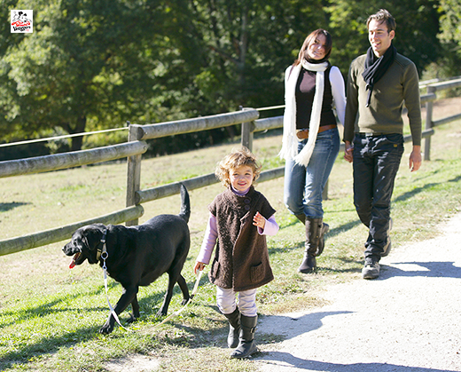 walking with dogleads to healthy lifestyle