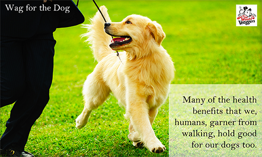 health benefits for walking dog